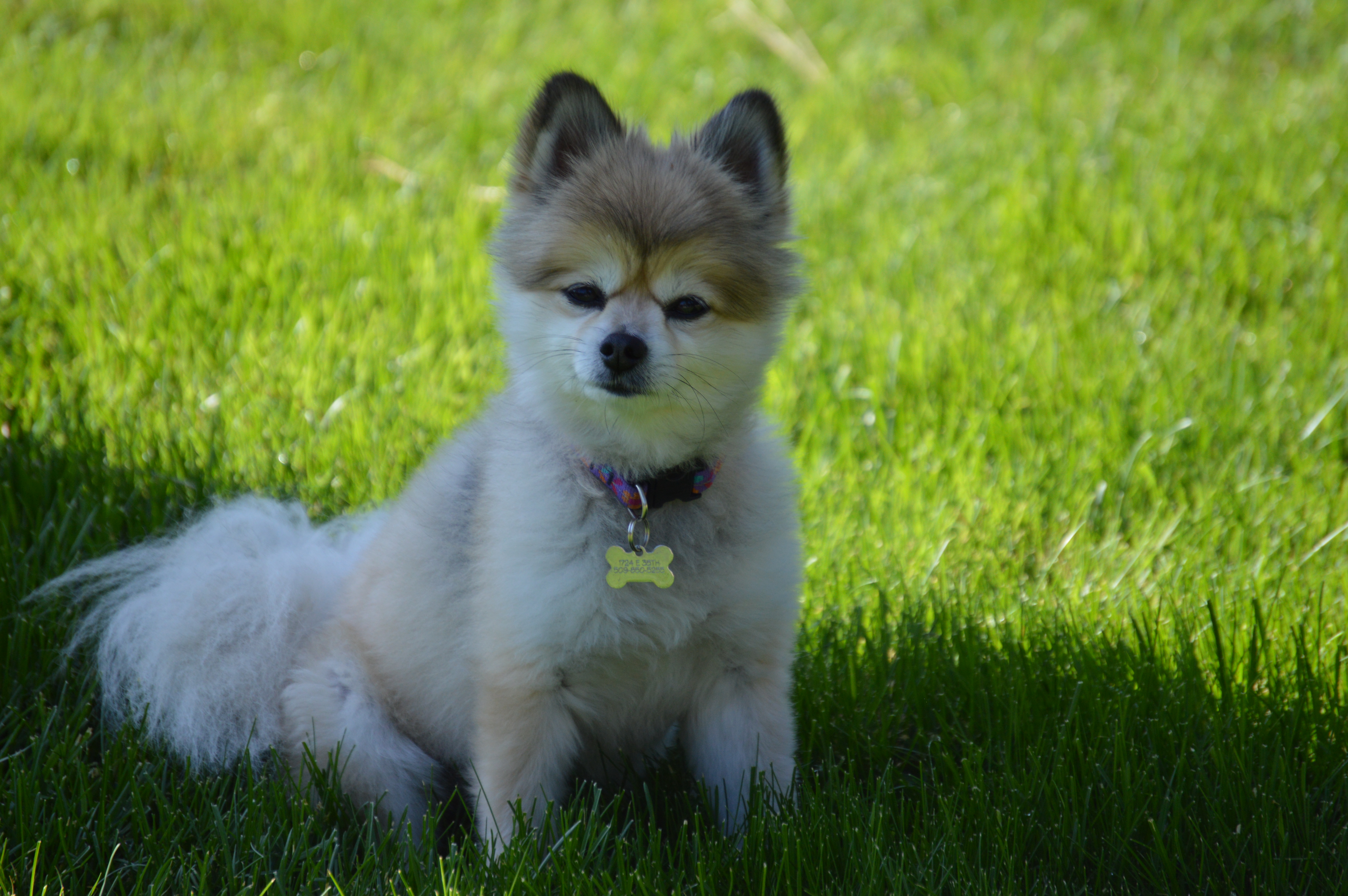 Worlds Prettiest Dog 2014 Images